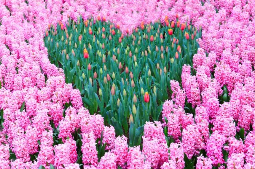цветник в форме сердца