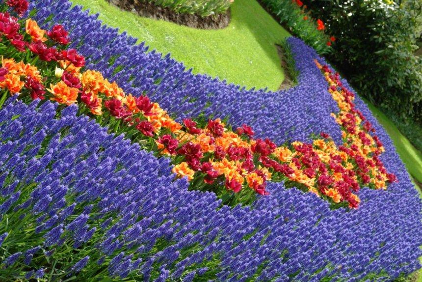оформление цветника весенними первоцветами