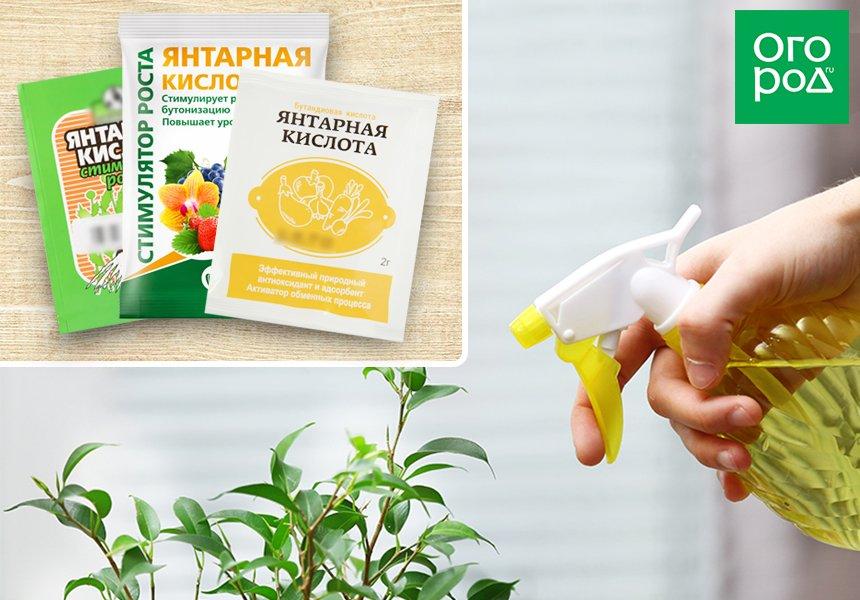 янтарная кислота порошок инструкция для растений