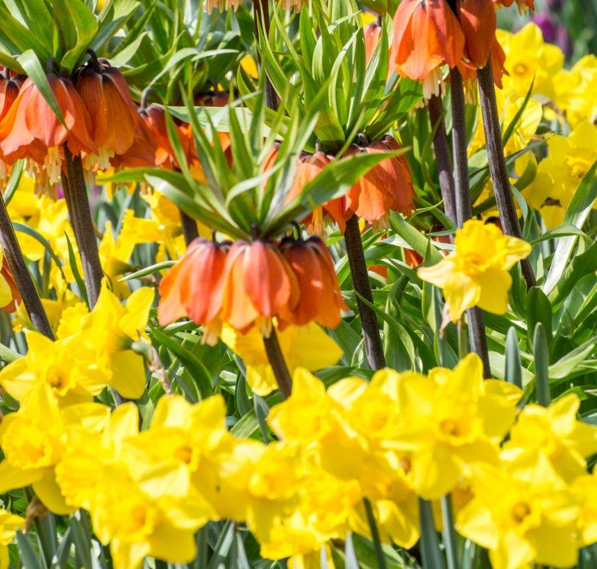 сочетание цветов на весенней клумбе