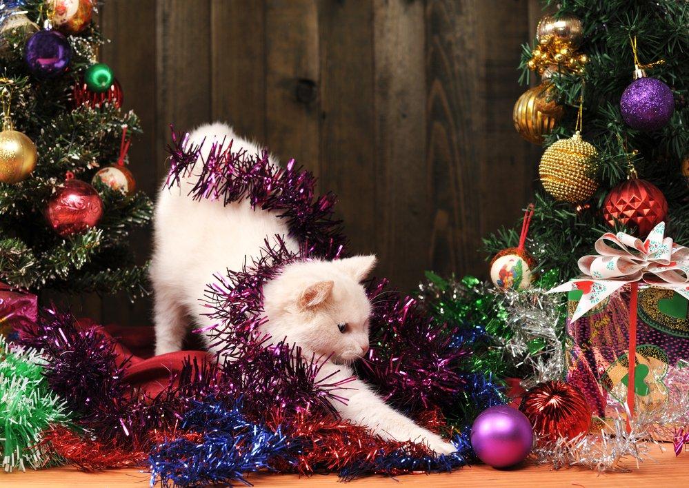 Домашние животные, которые ждут Нового года даже больше, чем их хозяева