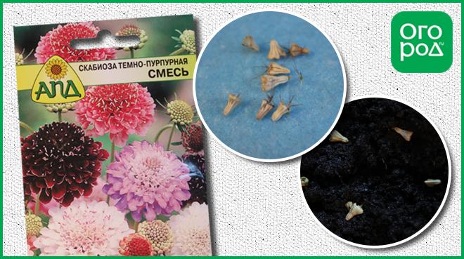 Семена цветов которые сажают в грунт 453