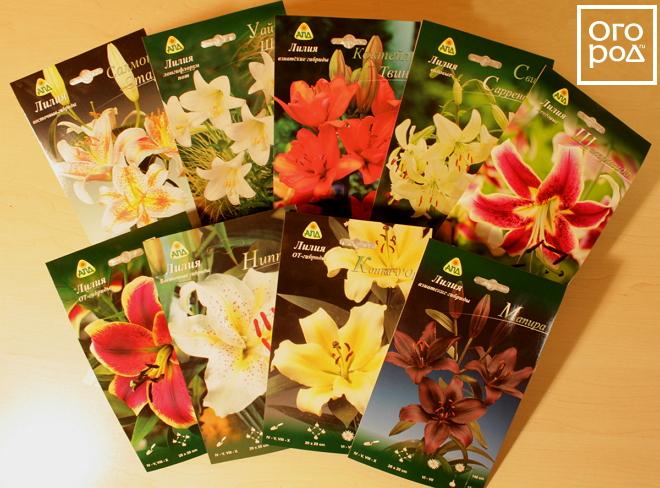 Клубни лилии купить